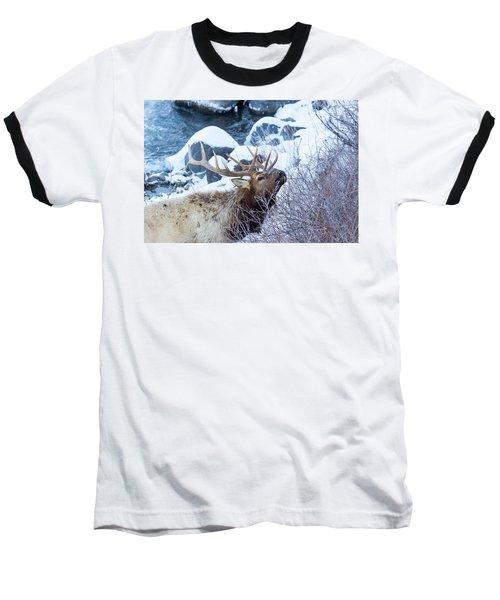 Grazing Elk Baseball T-Shirt