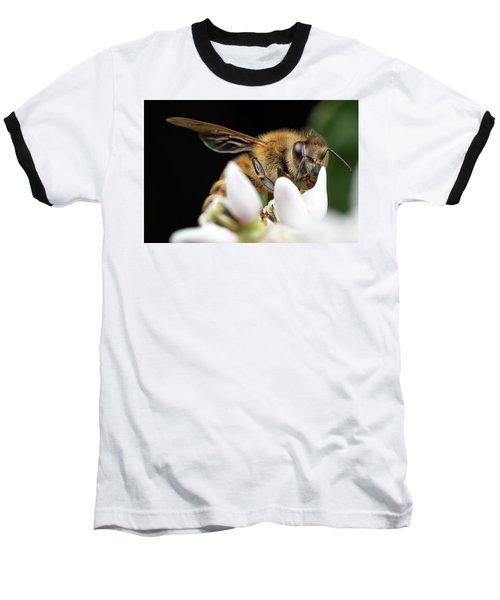 Honeybee Peeking Baseball T-Shirt