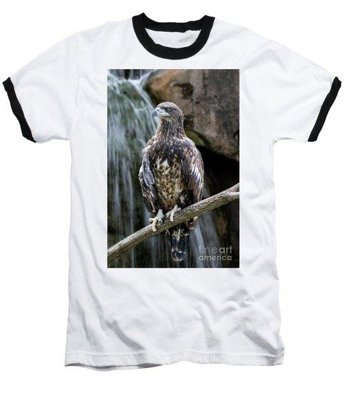 Juvenile Bald Eagle Baseball T-Shirt