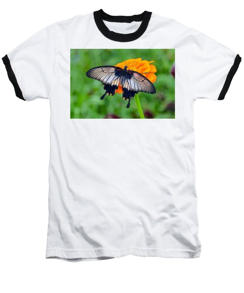 Kite Swallowtail  Baseball T-Shirt