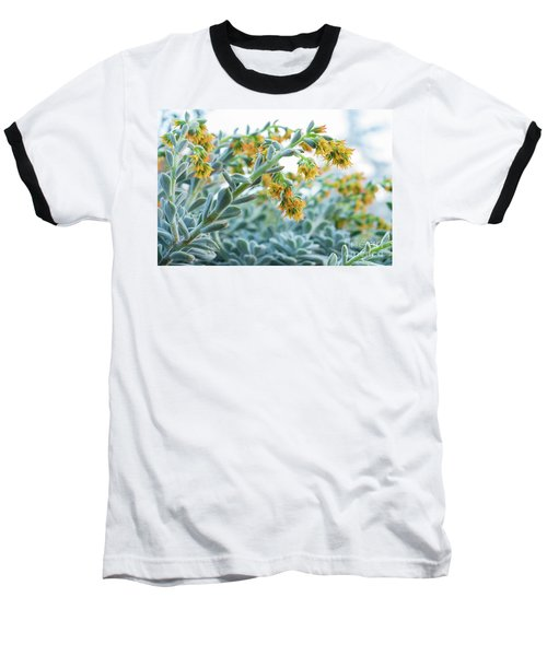 Mexican Echeveria In The  Morning Baseball T-Shirt