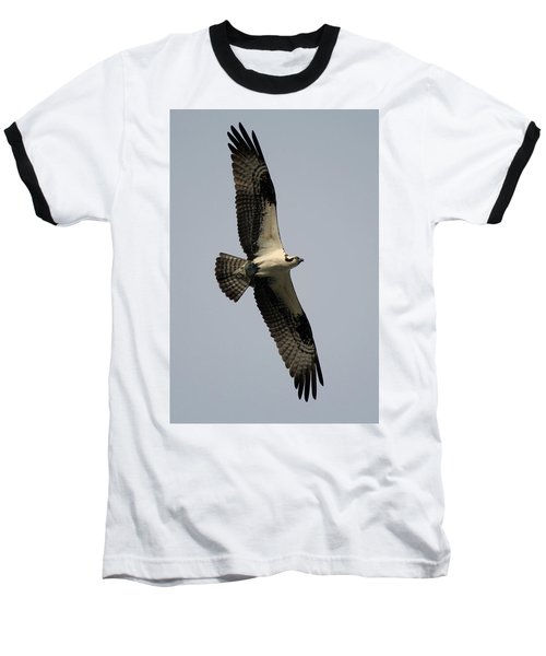 Osprey With Fish Baseball T-Shirt