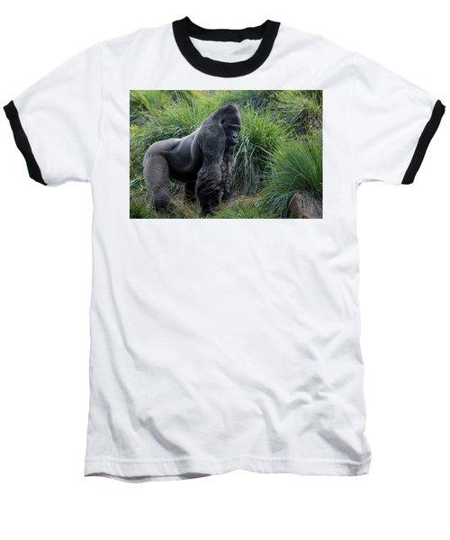 Silverback Stare 1806 Baseball T-Shirt