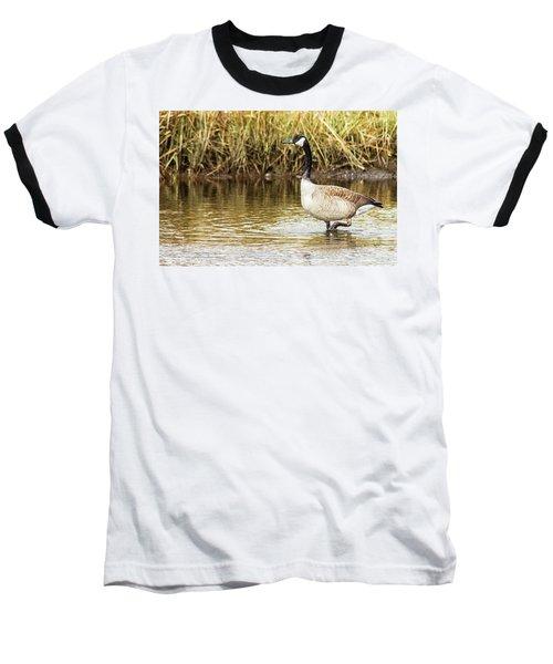 Wading Canada Goose Baseball T-Shirt