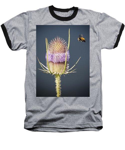 Beautiful Flowering Teasel Baseball T-Shirt
