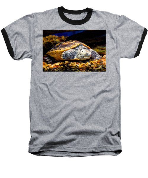 Sea Turtle Baseball T-Shirt by Savannah Gibbs