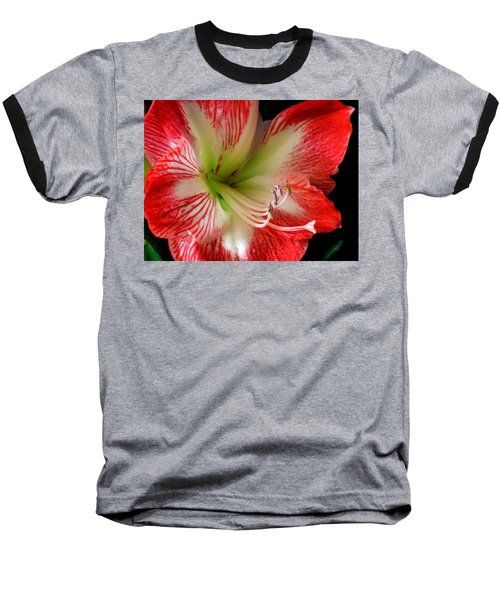 Amaryllis Baseball T-Shirt by Ron Davidson