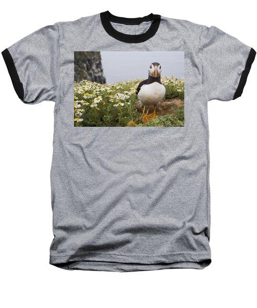 Atlantic Puffin In Breeding Plumage Baseball T-Shirt by Sebastian Kennerknecht