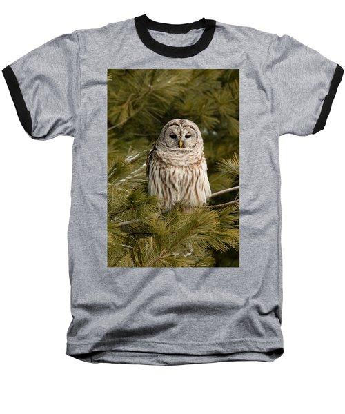 Barred Owl In A Pine Tree. Baseball T-Shirt