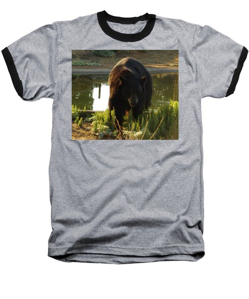 Bear 1 Baseball T-Shirt
