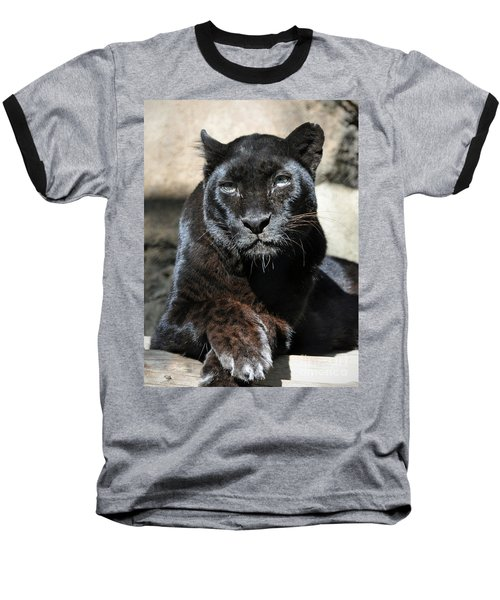Black Leopard Baseball T-Shirt by Savannah Gibbs