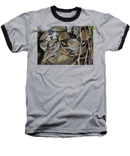 Boa Constrictor Baseball T-Shirt