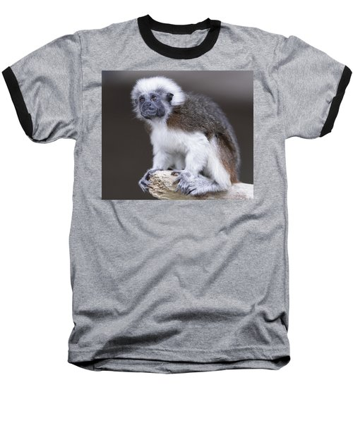 Baseball T-Shirt featuring the photograph Cotton Top Tamarin by Shoal Hollingsworth