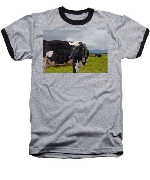 Cow Wearing Cowbell  Baseball T-Shirt