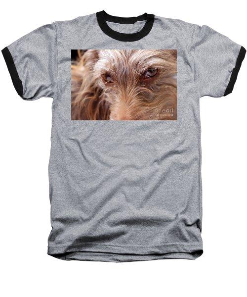 Dog Stare Baseball T-Shirt