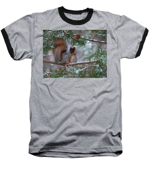 Eurasian Red Squirrel Baseball T-Shirt
