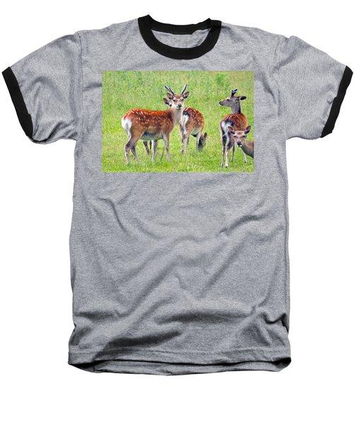 Fallow Deer Baseball T-Shirt