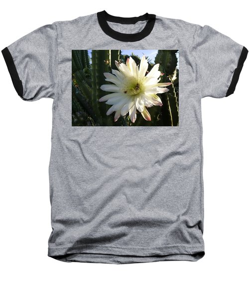 Flowering Cactus 1 Baseball T-Shirt