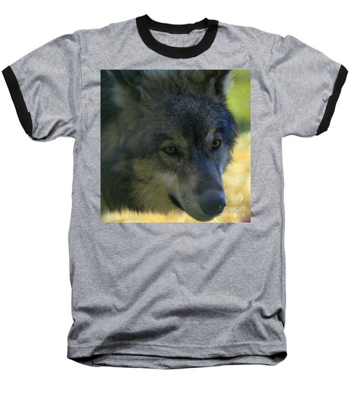Gray Wolf Baseball T-Shirt