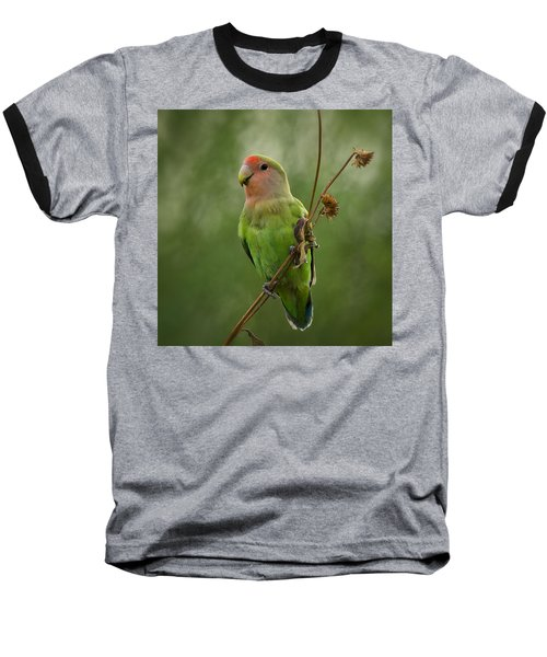 Lovely Little Lovebird  Baseball T-Shirt by Saija  Lehtonen