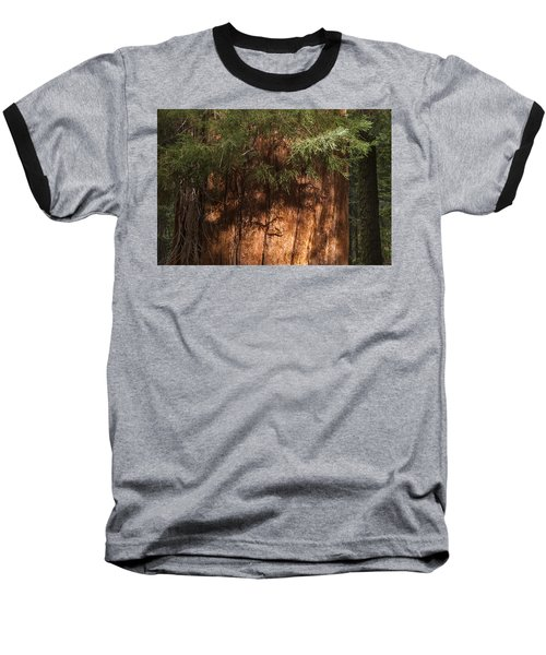 Sequoia Baseball T-Shirt by Muhie Kanawati