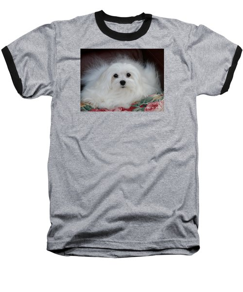 Baseball T-Shirt featuring the mixed media Snowdrop The Maltese by Morag Bates
