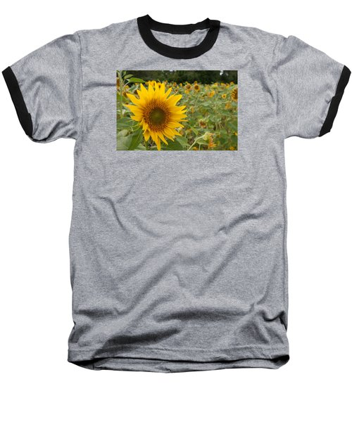 Sun Flower Fields Baseball T-Shirt by Miguel Winterpacht