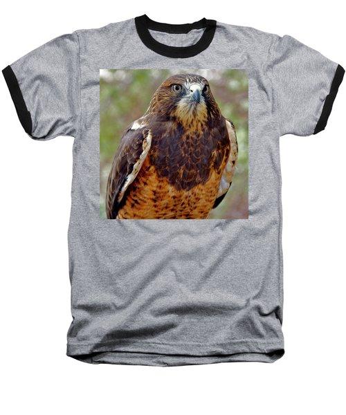 Swainson's Hawk Baseball T-Shirt
