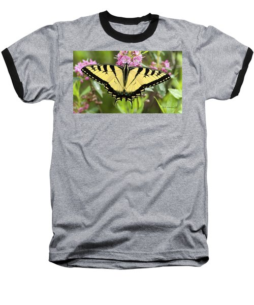 Tiger Swallowtail Butterfly On Milkweed Flowers Baseball T-Shirt