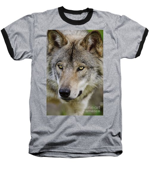 Timber Wolf Portrait Baseball T-Shirt
