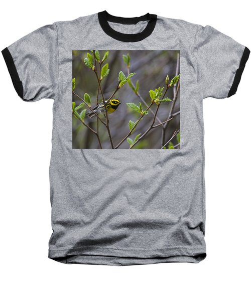 Townsends Warbler Baseball T-Shirt