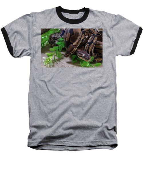 Two Burmese Pythons Python Bivittatus Baseball T-Shirt