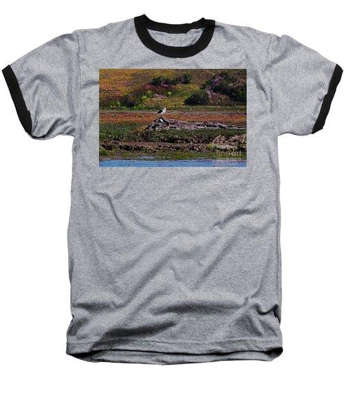 Western Gulls Nesting In A Log Baseball T-Shirt