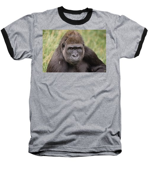 Western Lowland Gorilla Young Male Baseball T-Shirt by Gerry Ellis