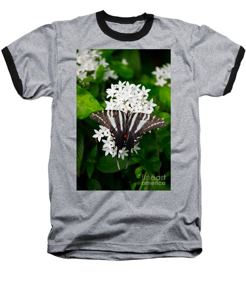 Zebra Swallowtail Baseball T-Shirt by Angela DeFrias