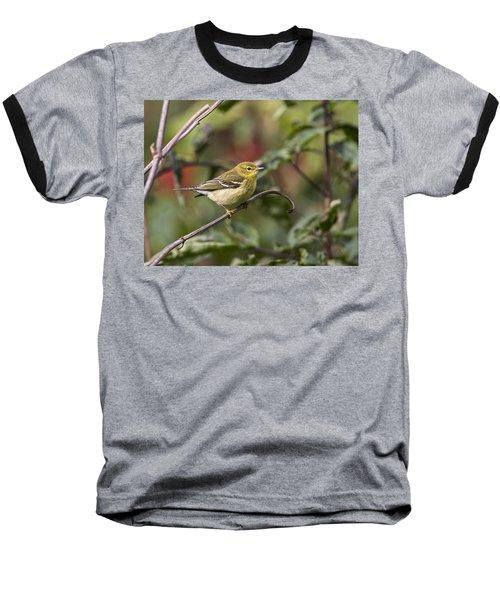 Blackpoll Warbler Baseball T-Shirt