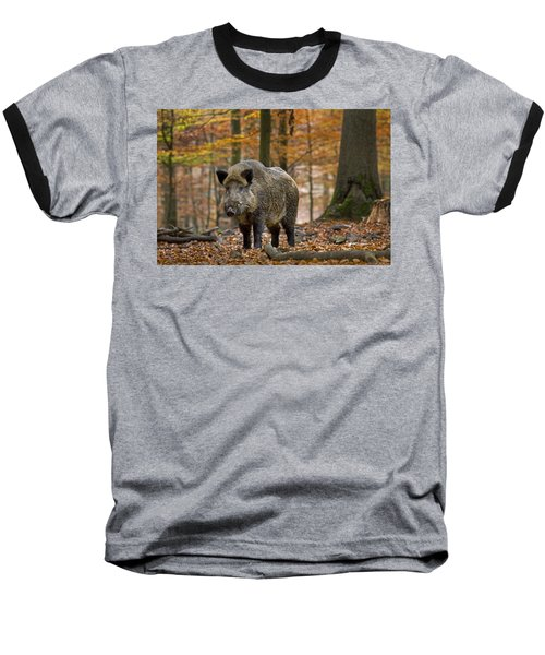 Baseball T-Shirt featuring the photograph 121213p283 by Arterra Picture Library