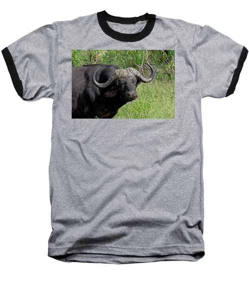 Cape Buffalo Baseball T-Shirt