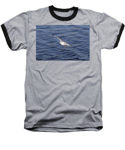 Flying Gull Baseball T-Shirt by Michal Boubin