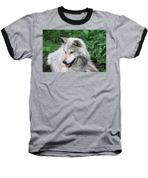 Gray Wolf Baseball T-Shirt by Alyce Taylor