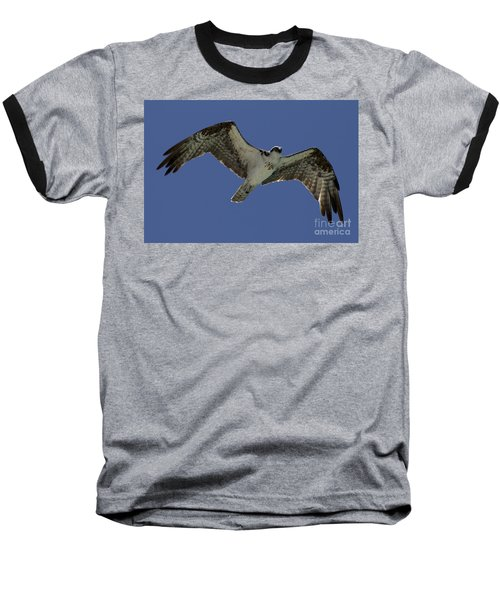 Baseball T-Shirt featuring the photograph Osprey In Flight Photo by Meg Rousher