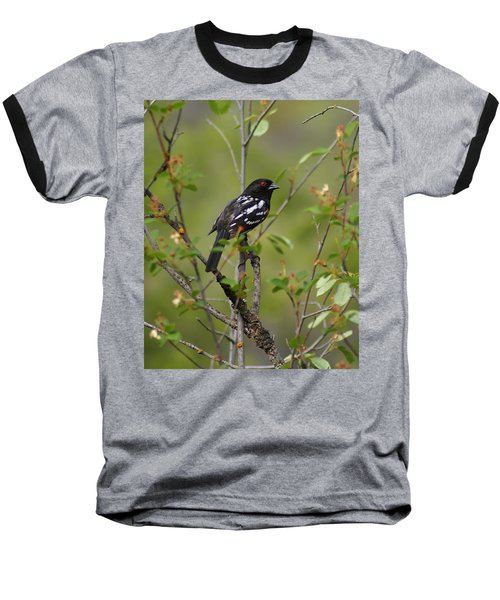 Spotted Towhee Baseball T-Shirt