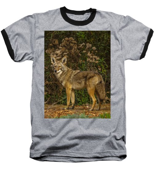 The Coyote Baseball T-Shirt