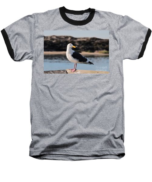 Western Gull At Moss Landing Inlet Baseball T-Shirt by Susan Wiedmann