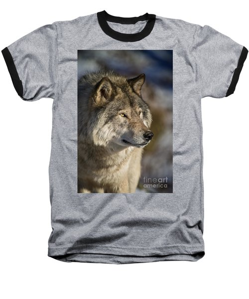 Timber Wolf Pictures Baseball T-Shirt by Michael Cummings