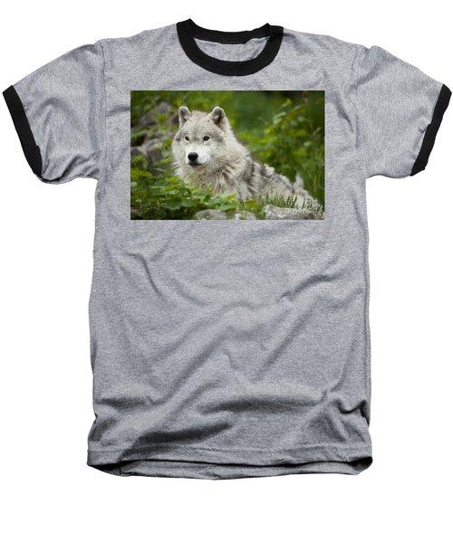 Arctic Wolf Baseball T-Shirt