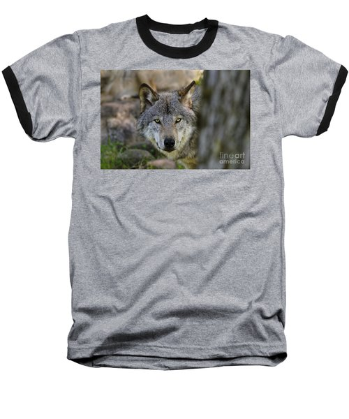 Timber Wolf Pictures Baseball T-Shirt