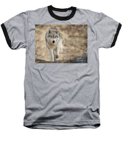 Baseball T-Shirt featuring the photograph Arctic Wolf by Wolves Only