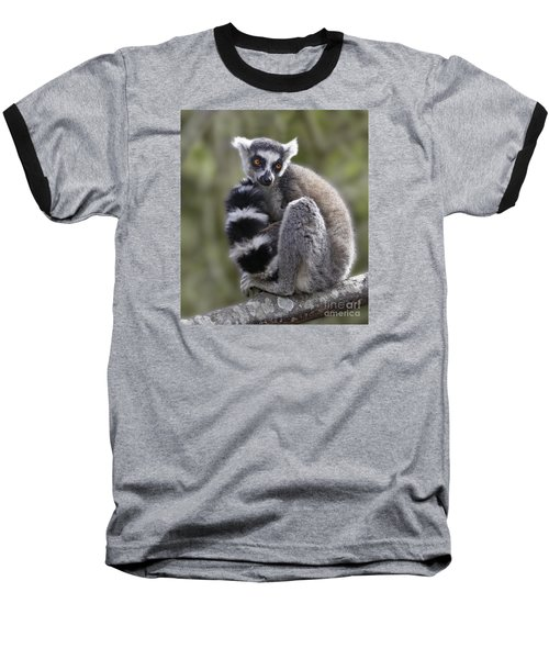 Ring-tailed Lemur Baseball T-Shirt