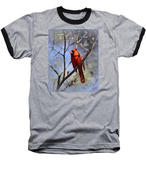 3477-006- Northern Cardinal Baseball T-Shirt